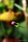Sebentar Lagi Jadi Bunga