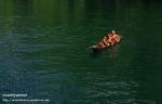 Riyanthi-Danau Toba-Marsilling di Dekat Batu Gantung